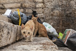 Kitten approaching camera on a stone staircase in front of a dumpster with lots of garbage bags and other junk, one more cat in background, outdoors exterior day in Jerusalem, Israel, stray animals