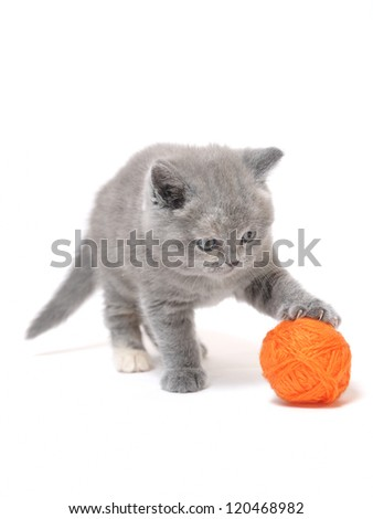 kitten ball