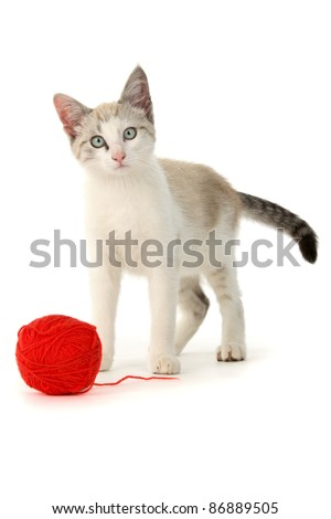 Kitten ball of yarn, on white background.