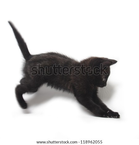 kitten being lazy isolated on white background