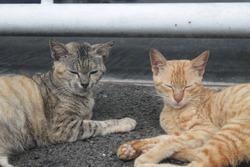 Kitten cat animal pets cute outdoor eye cateye adorable