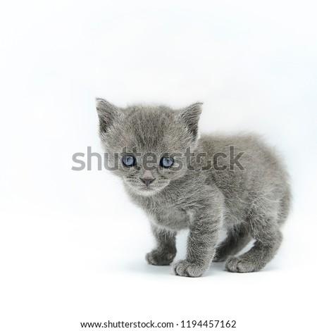 kitten cat cute #1194457162