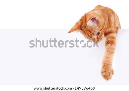 Kitten - cat holding sign or banner isolated on white #149396459