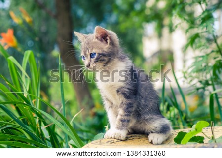 kitten cat stray cute pet animal feline. adorable outdoor. #1384331360