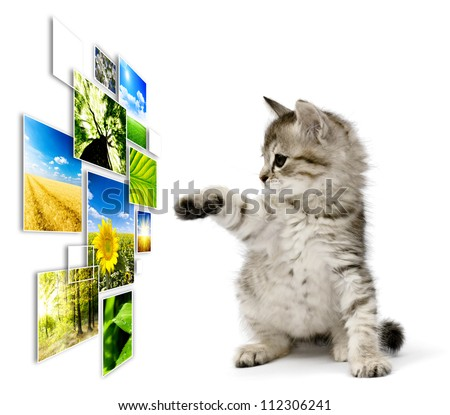 Kitten choosing photo collage of nature, isolated on white background