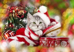 kitten christmas wearing santa hat
