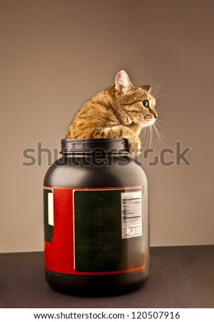 Kitten climbing out of a bank