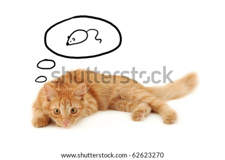 kitten dreaming of mouse isolated on white background