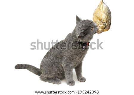 kitten eats fish on a white background close-up. horizontal photo.