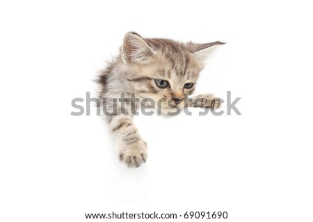 kitten hanging over blank poster board you add the message ez canvas