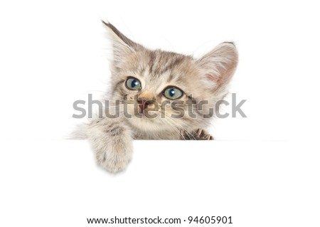 Kitten hanging over blank poster-board, you add the message.