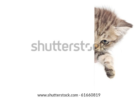 Kitten hanging over blank posterboard, you add the message.