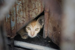 kitten hide behind rusty door hole in abandoned factory building, cute little kitten scared, homeless and stray