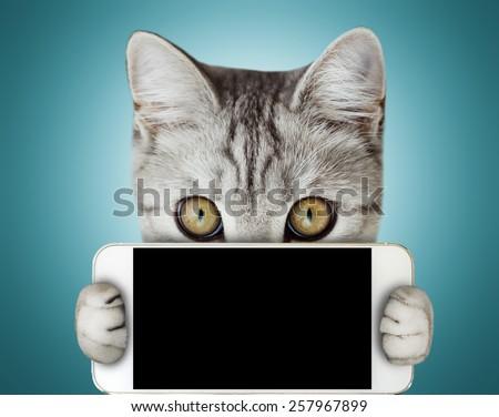 kitten holding mobile phone