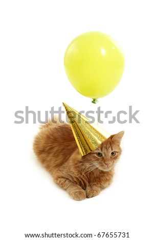 kitten holiday play with cap green balloon isolated on white background - stock photo