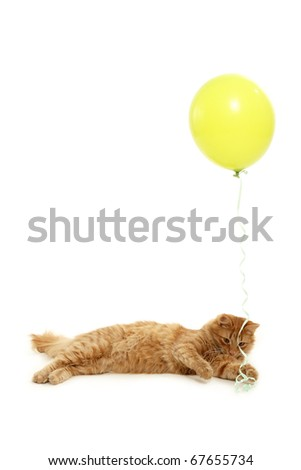 kitten holiday play with green balloon isolated on white background