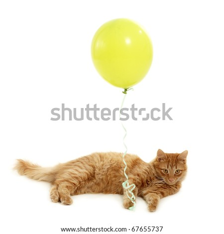kitten holiday with green balloon isolated on white background - stock photo