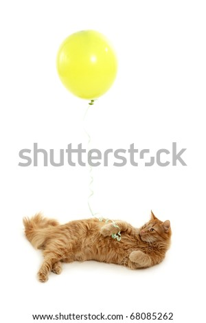 kitten holiday with green balloon isolated on white background