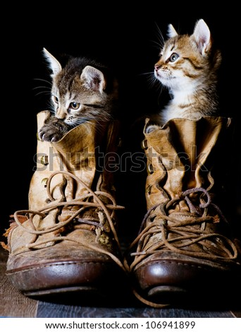 Kitten in a boot on a black background.