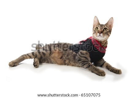 Kitten in a Christmas sweater sitting on an isolated white background