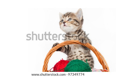 Kitten in a felt basket
