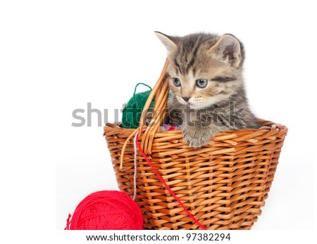 Kitten in a felt basket