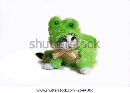 Kitten in a frog suit. amphibian