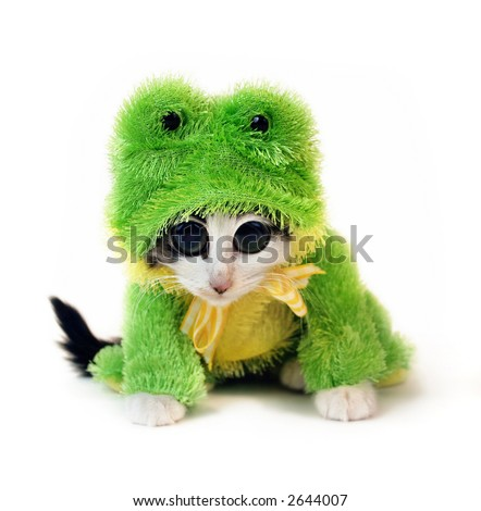 Kitten in a frog suit