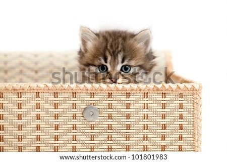Kitten in a gift box. It is isolated on a white background