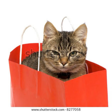 Kitten in a paper bag on a white background.