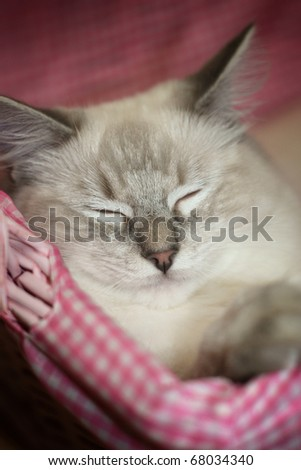 Kitten in a pink basket
