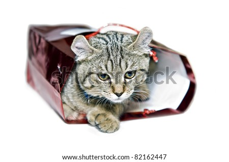 Kitten in a red gift bag.  Concept for giving love, adopting a pet, etc,