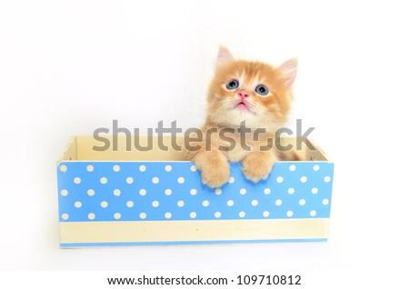 kitten in blue dot box
