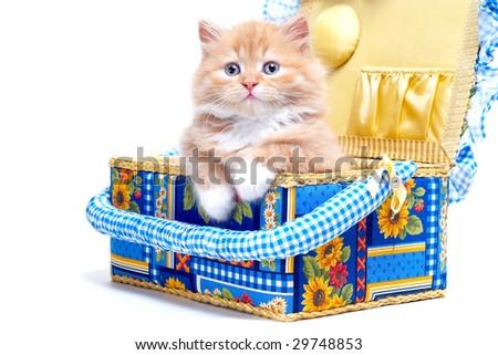 Kitten in empty casket