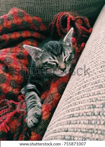 Kitten in flannel #755871007