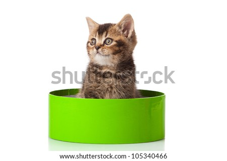 kitten in green gift box isolated on white.