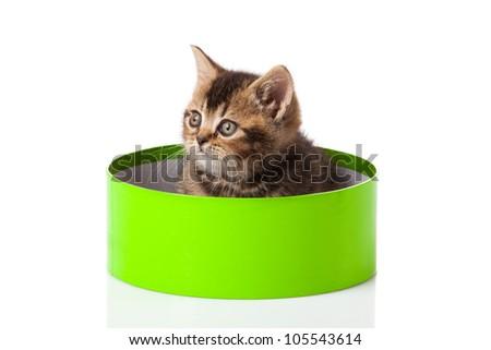 kitten in green gift box isolated on white.