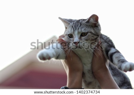 Kitten in hands. Cat in hands. Kitten on sky blurred background. Lift the cat up in the sky. #1402374734