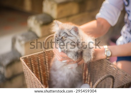 kitten in human hands in a basket with a vintage retro warm tone filter