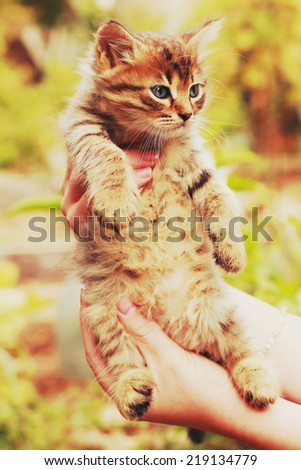 kitten in human hands with a vintage retro instagram filter