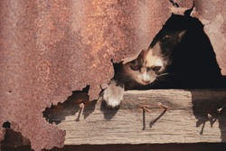 kitten in lust and wood