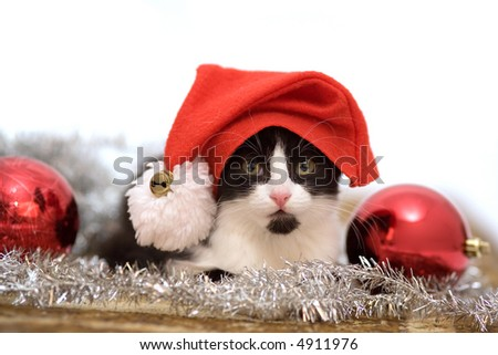 kitten in santa hat and christmas decorations