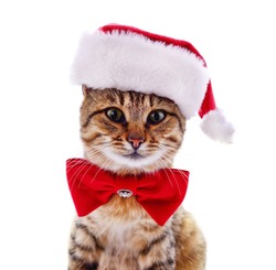 Kitten in Santa hat isolated on a white background.