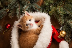 Kitten in santa hat on Christmas background and fur tree