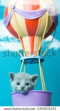 kitten in the air sitting in the baloon Zdjęcia stock ©