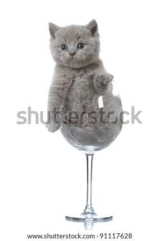 kitten in wine glass