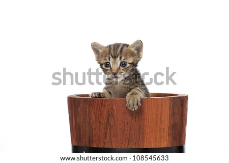 kitten in wooden bucket on white background