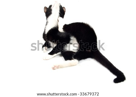 kitten is scratching herself isolated on white
