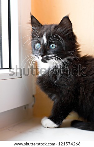 Kitten is sitting at the window - stock photo