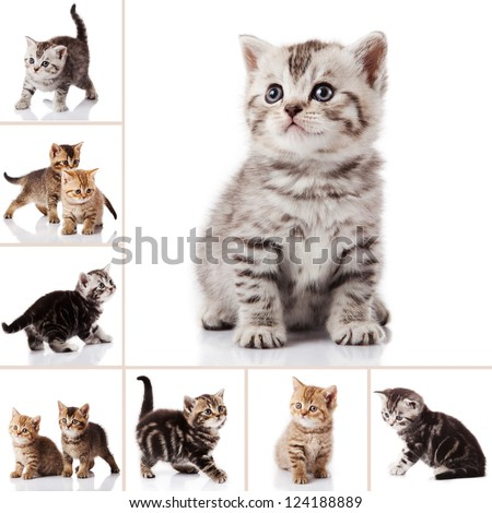 kitten isolated on white background. cat collection